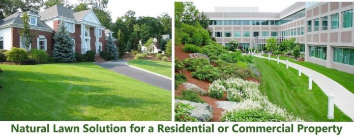 natural-lawn-solution